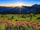Yeşillik Doğa ve Güneş