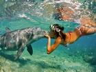 Yunus Balığı ve Yerli Kız